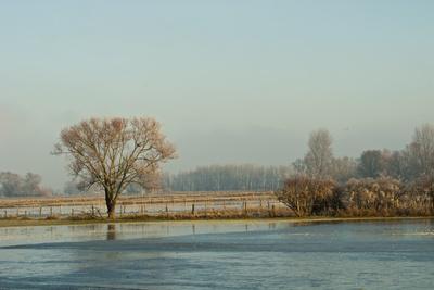 Wintermorgen in den Rheinauen