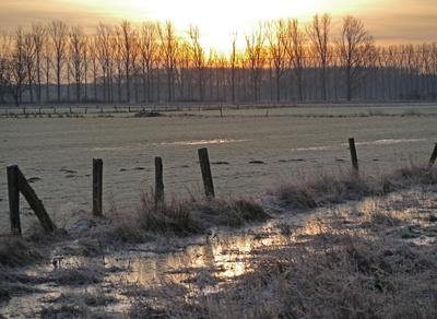 Kalter Januarmorgen im Venn