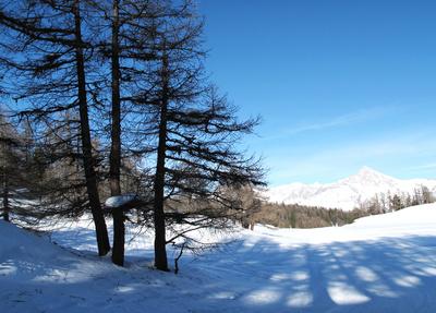 Winterliches Schattenspiel