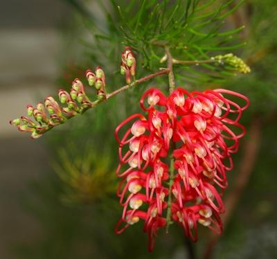 Blütenpracht 6