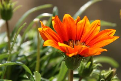 Blütenblätter in Orange
