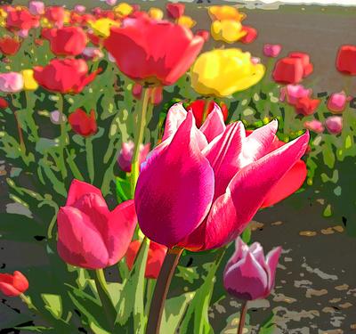 Tulpen Pop Art