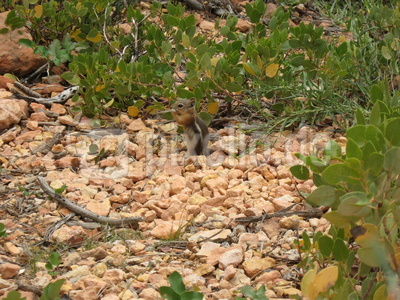 Squirrel im Bryce Canyon National Park