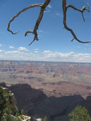 Äste ragen in den den Grand Canyon
