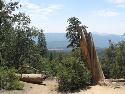 Umgestürzte Bäume im Yosemite National Park, nahe des Half Dome, Kalifornien, USA