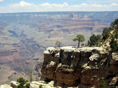 Bäume auf einem Vorpsprung im Grand Canyon