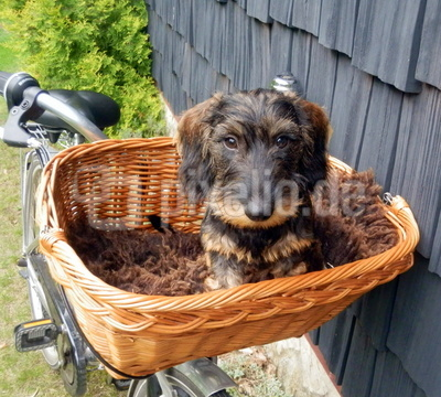 Fahrradkörbchen kennenlernen