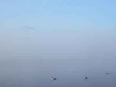 Novembermorgen an der Elbe
