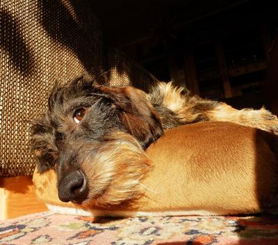 Hugo relaxed
