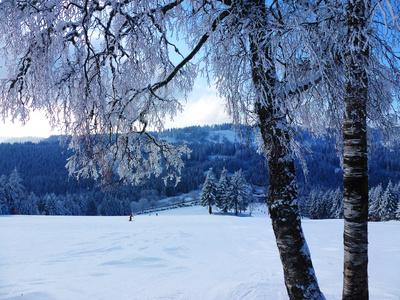 Frostiger Skihang am Ruhestein im Schwarzwald