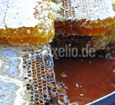 Honigwaben auf dem Basar