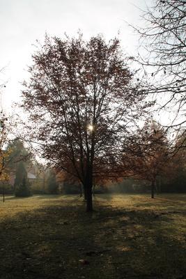 Ein Baum im Park