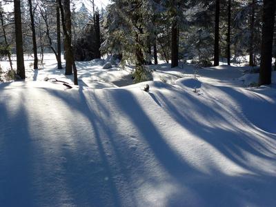 Winterstimmung im Nadelwald
