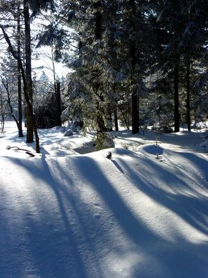 Winterstimmung im Nadelwald_hoch
