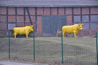 Auch gelbe Kühe machen mühe