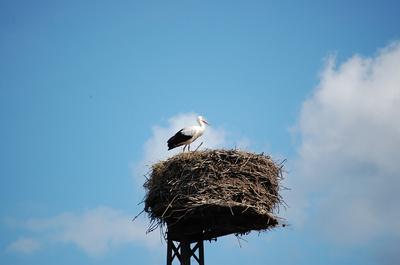 Bald wieder da - Gevatter Storch