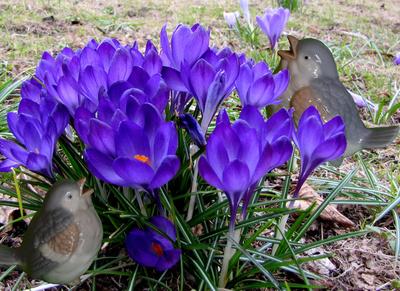 Warten auf den Frühling