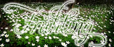 Buschwindröschen mit Text Frühling