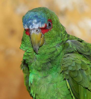 Papageien-Biometrie