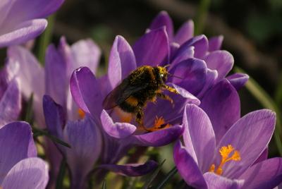 Zeit für Frühling!