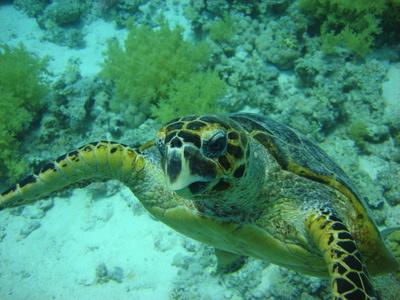 Wunderschöne Wasserschildkröte
