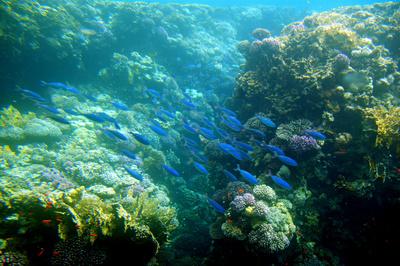 Abtauchen im Roten Meer 2
