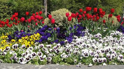 Frühlinshaft