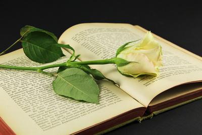 Aus Liebe zur Literatur