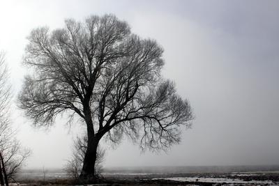Der letzte Winternebel