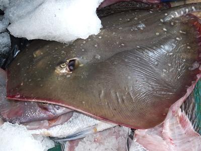 Oman: Fischmarkt 4