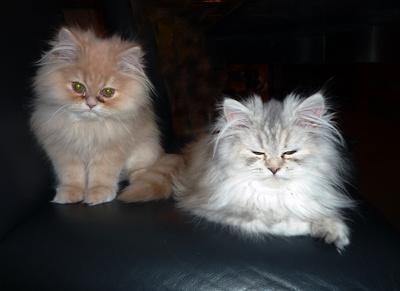 Katzengeschwister