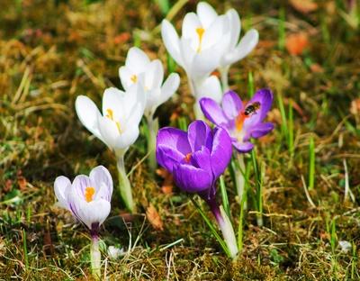 Frühling in Herrsching