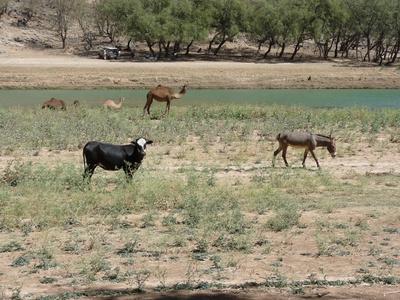 Oman: Wadi Darbat 4