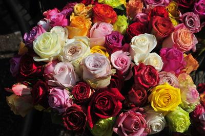 Markt - Rosen