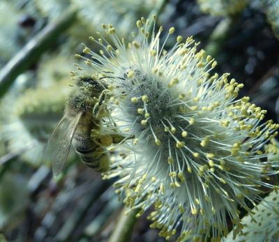 Im Pollenkleid