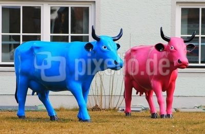 Sogar Kühe leuchten in Frühlingsfarben 4