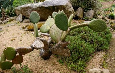 ein Kaktus für Karl-Heinz