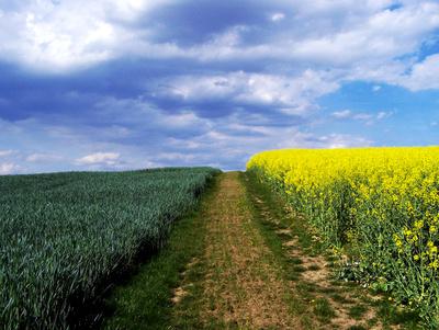 Himmel und Felder im Frühling