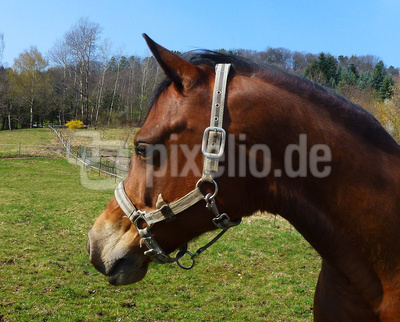 Tatendurstiges Energiebündel auf der Pferdekoppel