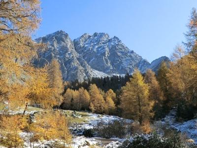 Herbstlicher Lärchenwald vor dem Ifinger in Südtirol