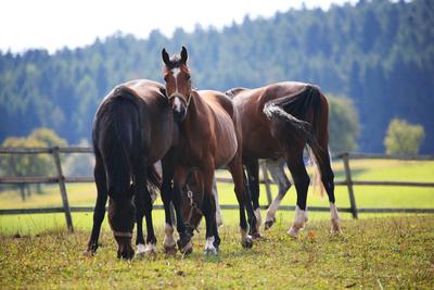 Pferdekoppel - einer passt auf