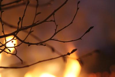 Der heiße Baum