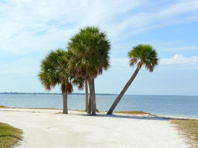 Miami Beach Palmen