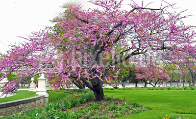 Im Jardin des Tuileries - Paris