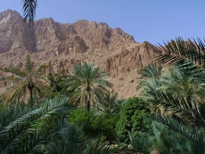 Oase Wadi Tiwi