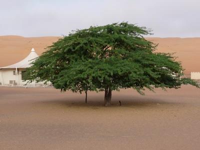 Oman: Wüstencamp