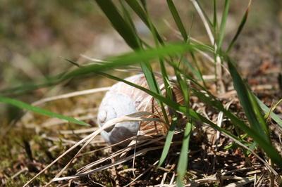 Schnecke im Gras