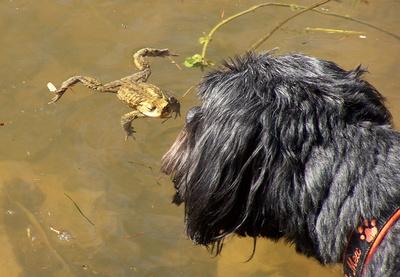 Hund Mex küsst den Frosch!