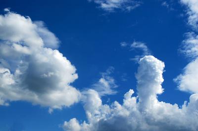 Wolkenpilz