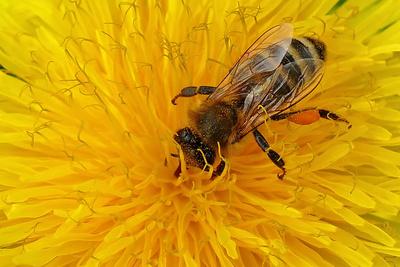 im Pollenrausch...